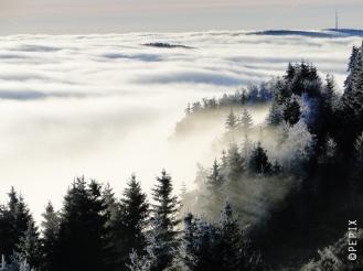 Hochheide im Nebel