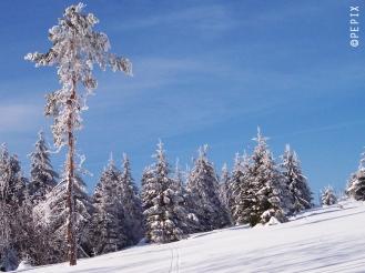 Winter auf dem Kahlen Asten