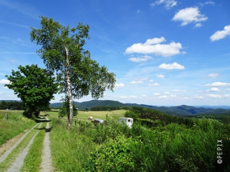 Sommerwiese in Winterberg