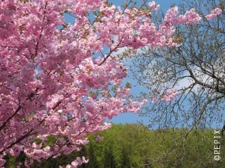 Frühlingsblüten in Mollseifen