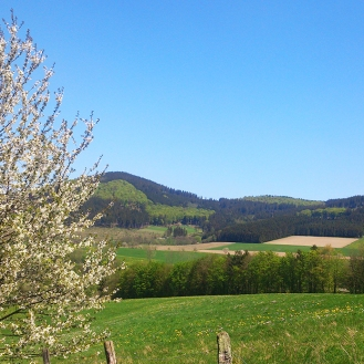 Frühlingswiese bei Siedlinghausen
