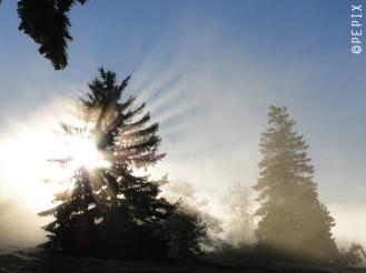 Sonnenstrahlen gefiltert