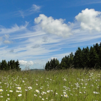 Sommerwiese am Dumel in Winterberg