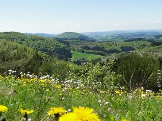 Sommerwiese mit Blick nach Schmallenberg