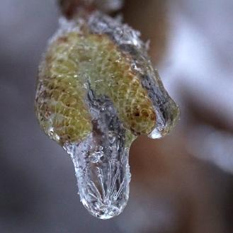 ice03